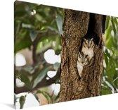 Twee Indische dwergooruilen in een boomstam Canvas 180x120 cm - Foto print op Canvas schilderij (Wanddecoratie woonkamer / slaapkamer) XXL / Groot formaat!