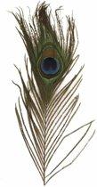 6x Pauwenveren - decoratie veertjes