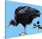 Een gier in de blauwe lucht Canvas 60x40 cm - Foto print op Canvas schilderij (Wanddecoratie woonkamer / slaapkamer)