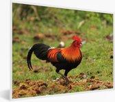 Foto in lijst - Een gekleurde Bankivahoen in het groene gras fotolijst wit 40x30 cm - Poster in lijst (Wanddecoratie woonkamer / slaapkamer)