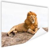 Liggende leeuw Poster 150x75 cm - Foto print op Poster (wanddecoratie woonkamer / slaapkamer) / Dieren Poster