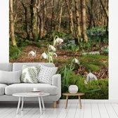 Fotobehang vinyl - Bos in Borrowdale met sneeuwklokjes breedte 280 cm x hoogte 280 cm - Foto print op behang (in 7 formaten beschikbaar)
