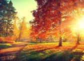 Papermoon Autumn Trees Vlies Fotobehang 200x149cm 4-Banen