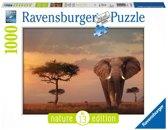Ravensburger puzzel Olifant in het Masai Mara - Legpuzzel - 1000 stukjes