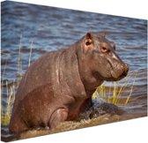 Baby nijlpaard Canvas 80x60 cm - Foto print op Canvas schilderij (Wanddecoratie woonkamer / slaapkamer) / Dieren Canvas Schilderijen