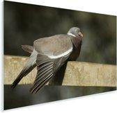 Beeld van een houtduif op een hek Plexiglas 180x120 cm - Foto print op Glas (Plexiglas wanddecoratie) XXL / Groot formaat!