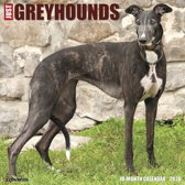 Greyhound Kalender 2020
