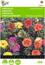Portulaca grandiflora (dubbelbloemig gemengd) - set van 8 stuks