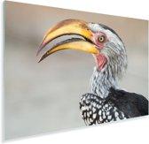 Een portret van een Zuidelijke geelsnaveltok Plexiglas 180x120 cm - Foto print op Glas (Plexiglas wanddecoratie) XXL / Groot formaat!