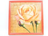 Schilderij Oranje Roos 36 CM X 36 CM