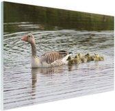 Gans met baby's Glas 30x20 cm - klein - Foto print op Glas (Plexiglas wanddecoratie)