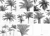 Kaartenset Palmbomen - 8 stuks - A6 - Zwart/Wit - Fabrikten