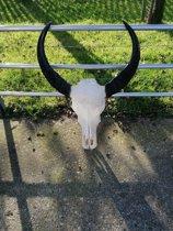 buffel schedel waterbuffel schedel schedel skull