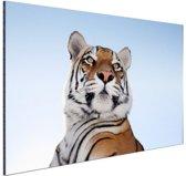 Stoere tijger blauwe lucht Aluminium 90x60 cm - Foto print op Aluminium (metaal wanddecoratie)
