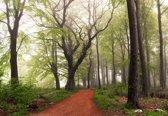Fotobehang Follow The Red Path|V8 - 368cm x 254cm|Premium Non-Woven Vlies 130gsm