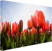 Rode tulpen in de zon Canvas 120x80 cm - Foto print op Canvas schilderij (Wanddecoratie woonkamer / slaapkamer)