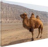 Staande kameel in China Canvas 80x60 cm - Foto print op Canvas schilderij (Wanddecoratie)