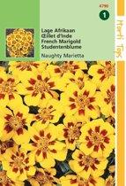 Hortitops Zaden - Afrikaantje Naughty Marietta (Tagetes patula nana)