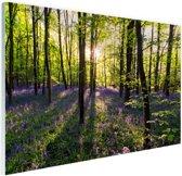 Paarse bloemen in het bos Glas 90x60 cm - Foto print op Glas (Plexiglas wanddecoratie)