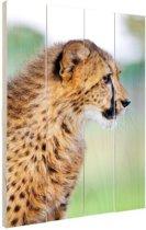 Luipaard profiel foto Hout 120x160 cm - Foto print op Hout (Wanddecoratie) XXL / Groot formaat!