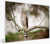 Foto in lijst - Smelleken op een tak fotolijst wit 40x30 cm - Poster in lijst (Wanddecoratie woonkamer / slaapkamer)