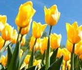 Tuinposter | Tuindoek - Tulpen