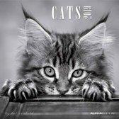 Beeldkalender Cats 2019 - Katten - 6 talig - zwart wit - 30 x 30 cm