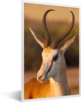Foto in lijst - Close up van een Gazelle tijdens zonsondergang fotolijst wit 40x60 cm - Poster in lijst (Wanddecoratie woonkamer / slaapkamer)