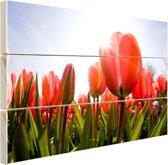Rode tulpen in de zon Hout 160x120 cm - Foto print op Hout (Wanddecoratie) XXL / Groot formaat!