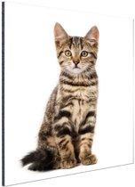 Poserende kitten Aluminium 40x60 cm - Foto print op Aluminium (metaal wanddecoratie)