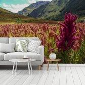 Fotobehang vinyl - Kleurrijk veld met het rode quinoa in een groen dal breedte 295 cm x hoogte 220 cm - Foto print op behang (in 7 formaten beschikbaar)