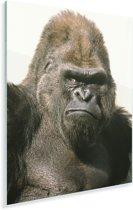 Zonnestralen schijnen in de ogen van de Gorilla Plexiglas 60x80 cm - Foto print op Glas (Plexiglas wanddecoratie)