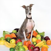 Excellent Italian Grey Greyhound