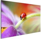 Lieveheersbeestje op een paarse bloem Aluminium 120x80 cm - Foto print op Aluminium (metaal wanddecoratie)