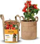 Minituintje BIO tomaten kweken