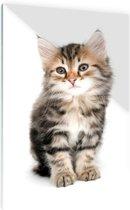 Jong grijs katje Glas 20x30 cm - Foto print op Glas (Plexiglas wanddecoratie)