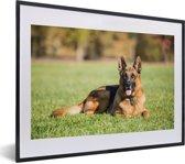 Foto in lijst - Duitse herdershond ligt op het gras fotolijst zwart met witte passe-partout klein 40x30 cm - Poster in lijst (Wanddecoratie woonkamer / slaapkamer)