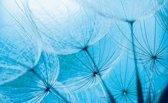 Fotobehang Abstract | Blauw | 416x254
