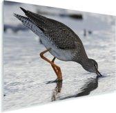 Een tureluur op zoek naar voedsel Plexiglas 90x60 cm - Foto print op Glas (Plexiglas wanddecoratie)
