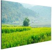 Rijstvelden in Azie foto Aluminium 60x40 cm - Foto print op Aluminium (metaal wanddecoratie)