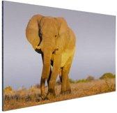 Afrikaanse olifant in het zand Aluminium 90x60 cm - Foto print op Aluminium (metaal wanddecoratie)
