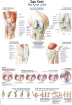 Het menselijk lichaam - anatomie poster kniegewricht (Duits/Engels/Latijn, papier, 50x70 cm)  + ophangsysteem