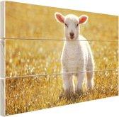 Een jong lam Hout 120x80 cm - Foto print op Hout (Wanddecoratie)