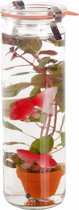 Waterworld Glas - Waterplant + 2 Kunststof Goudvissen