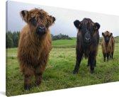 Drie Schotse hooglander kalfjes Canvas 90x60 cm - Foto print op Canvas schilderij (Wanddecoratie woonkamer / slaapkamer) / Wilde dieren Canvas Schilderijen
