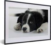 Foto in lijst - Border Collie hond liggend op de vloer fotolijst zwart met witte passe-partout klein 40x30 cm - Poster in lijst (Wanddecoratie woonkamer / slaapkamer)