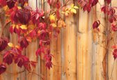 Fotobehang Wood Fence Flowers | M - 104cm x 70.5cm | 130g/m2 Vlies