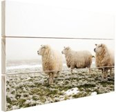 Drie schapen in de winter Hout 60x40 cm - Foto print op Hout (Wanddecoratie)