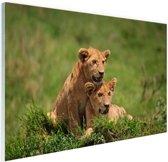 Twee welpen in gras Glas 90x60 cm - Foto print op Glas (Plexiglas wanddecoratie)
