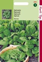 Hortitops Zaden - Spinazie Nores 15 gram